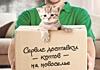 Сбербанк предложил доставку котов на новоселье
