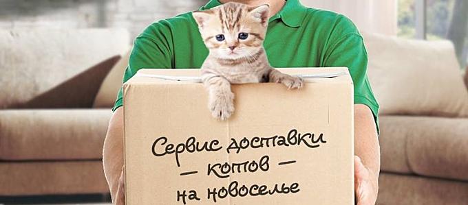 http://cms.sravni.ru/Media/Default/Material/Picture/mat_52835.jpg